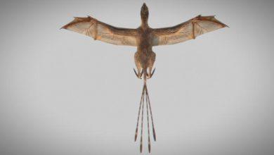 صورة علماء: ديناصور بجناحين كالخفاش أحدث تحولا مثيرا في تطور الطيور