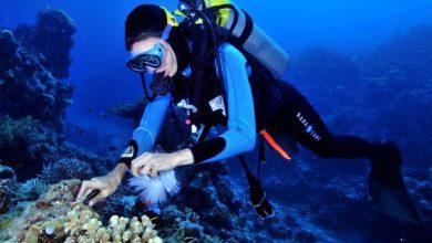 صورة العثور على علاج مرض السل في قاع البحر