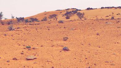 """صورة لبيك """"أم اعريف""""… """"عَمْرُو""""…./ الشيخ بكاي"""