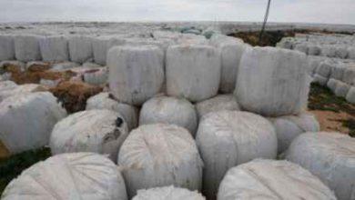 صورة سلطات التونسية تسعى لإعادة شحنة نفايات إيطالية مخالفة لاتفاقيتي بازل وباماكو